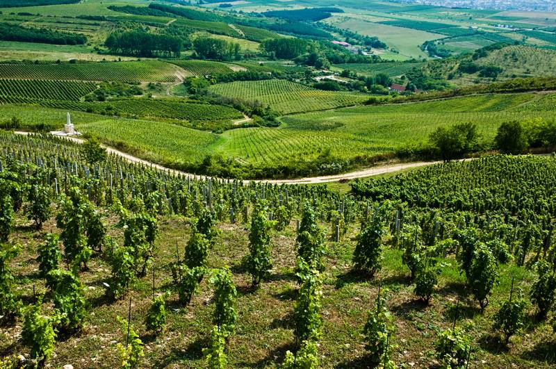 VINEYARDS OF BUDAPEST